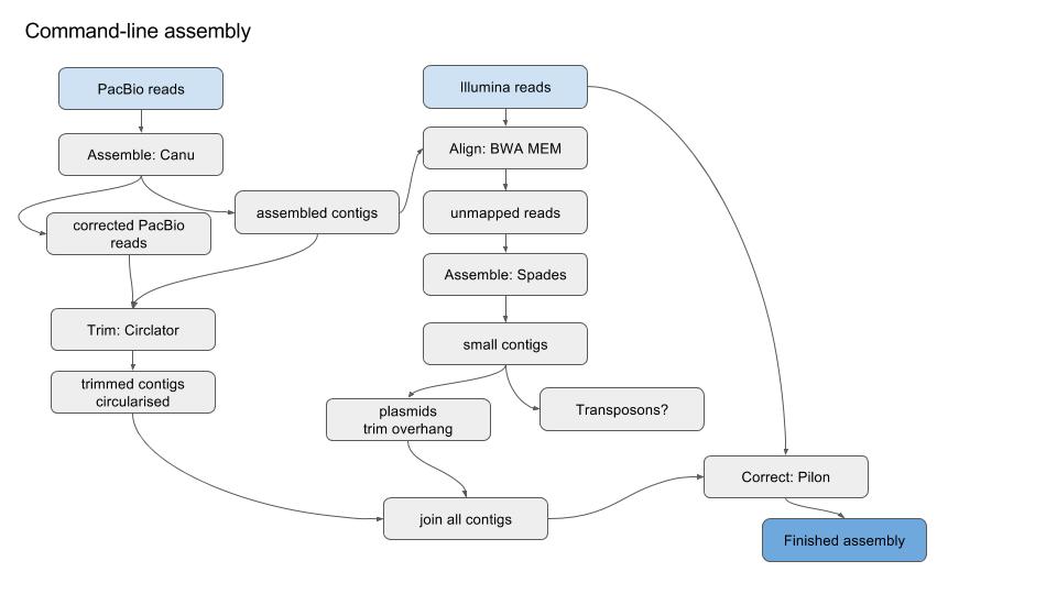 Long read assembly - Bioinformatics Documentation